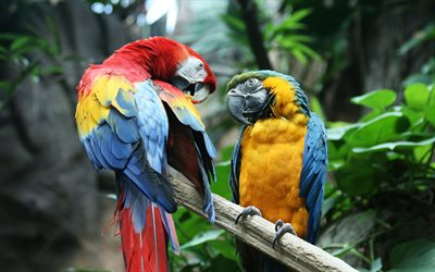 4k, Macaw, Scarlet macaw, parrots, branch, colorful parrot, Ara, Ara macao
