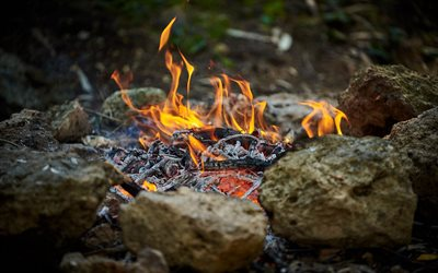 bonfire, flame, fire, forest, burning bonfire, stones