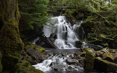 forest waterfall, forest, beautiful waterfalls, river, North Cascades National Park, Washington, USA