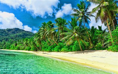 Caribbean islands, sea, palm trees, paradise, beach, HDR, beautiful nature, South America