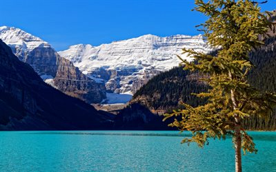 lake louise, banff national park, glacier lake, emerald lake, berg, landschaft, kanada