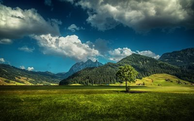 Mountains, alps, summer, meadow, forest, Switzerland