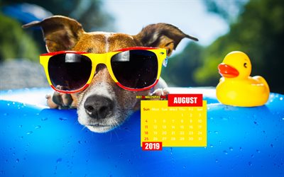 August 2019 Calendar, 4k, funny dog, summer, 2019 calendar, August 2019, creative, August 2019 calendar with dog, Calendar August 2019, dog on swimming pool, 2019 calendars