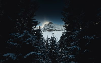 mountain landscape, snow-covered trees, winter, snow, mountains, forest, evening