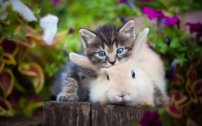 small gray kitten, white furry rabbit, friendship concepts, cute animals