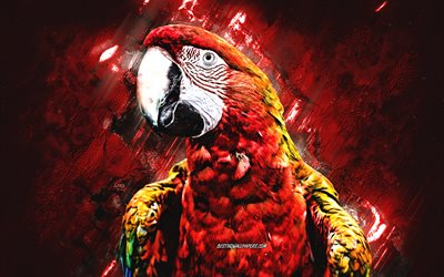 Scarlet Macaw, red yellow blue parrot, Macaw, red stone background, creative art, parrots