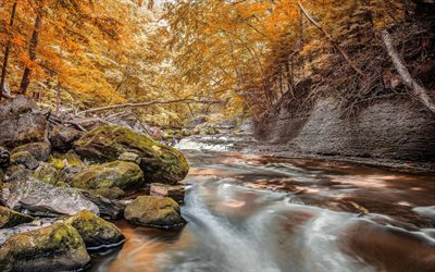 mountain stream, autumn, yellow trees, forest, yellow leaves, stones