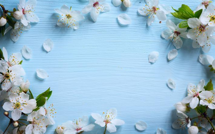 Scarica Sfondi Meli In Fiore Primavera Blu Legno Sfondo