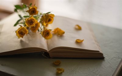 old book, yellow roses, rose petals, book, history concepts