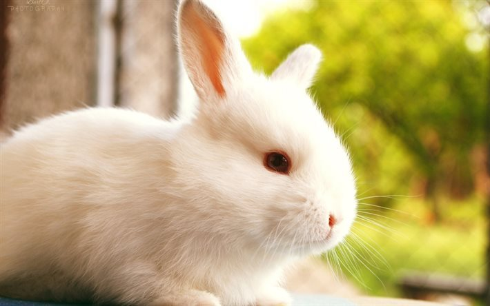 cute animals, white rabbit, blur, rabbits