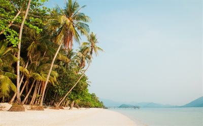 tropical island, palms, beach, Thailand, sea, evening, summer travel
