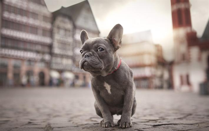 puppy ダウンロード
