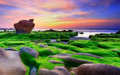 Vietnam, sea, coast, green moss, seaweed, sunset
