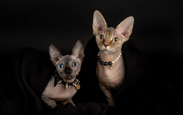Best Food For Hairless Cats
