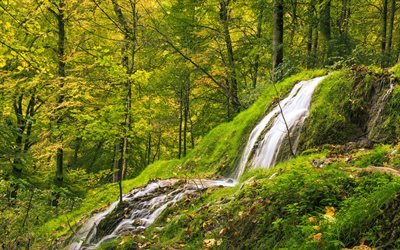 forest, waterfall, rock, green grass, forest waterfall, mountain river