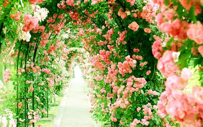 flower greenhouse, pink roses, alley, tunnel of roses, beautiful flowers, roses