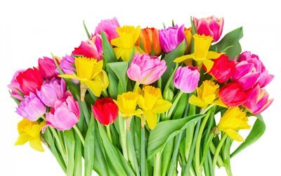 colorful tulips, field flowers, tulips, red tulips, big bouquet