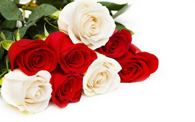bouquet of red and white roses, red roses, white roses, roses on a white background, background with roses, beautiful flowers
