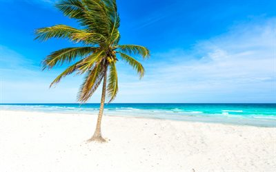 palm, beach, ocean, white sand, tropical islands, travel concepts, waves, wind