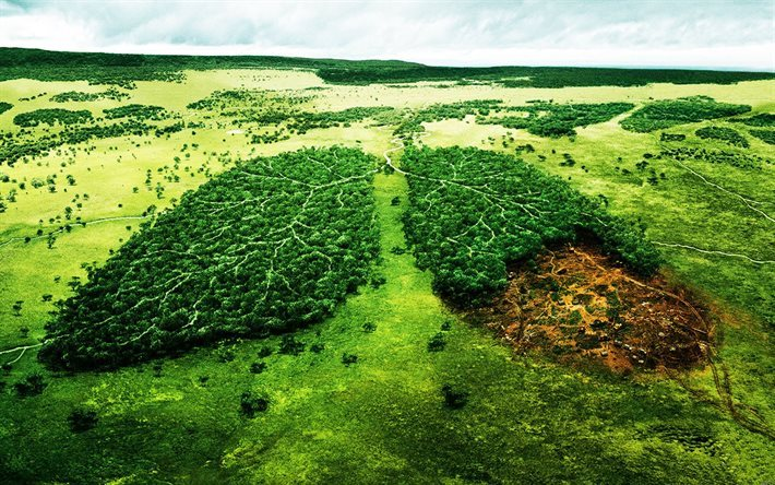 ecology, deforestation, forest, lungs of Planet, Earth