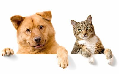 dog and cat, friends, brown dog, cat