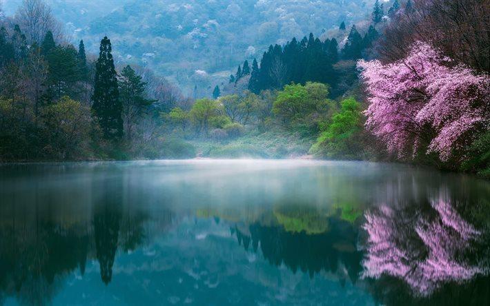Scarica sfondi giappone primavera sakura lago mattina for Sfondi desktop primavera