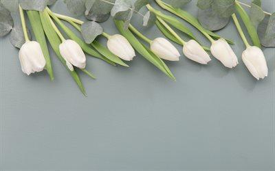 herunterladen hintergrundbild wei e tulpen fr hjahr blumen grauen hintergrund floral. Black Bedroom Furniture Sets. Home Design Ideas