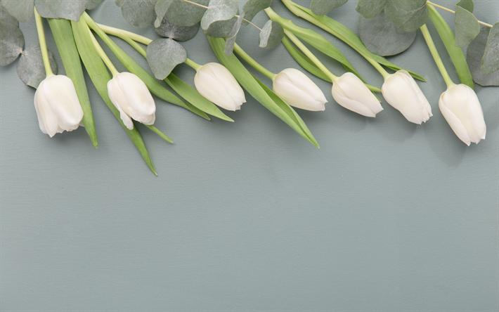 Download imagens tulipas brancas, flores da primavera