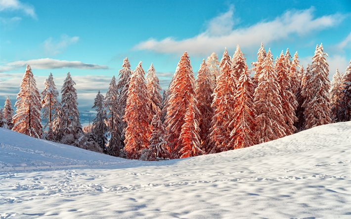 winter, mountains, snow, winter landscape, mountain landscape, red trees, morning