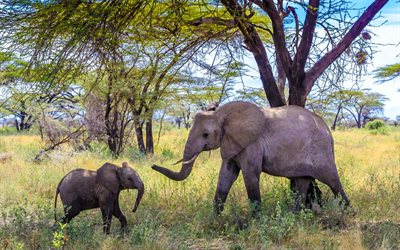 Little Elephant, Africa, Elephant, Mom and Cub, Wildlife, Elephants