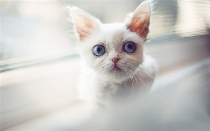 White Cat With Big Blue Eyes Pets Cute Animals Cats Kittens