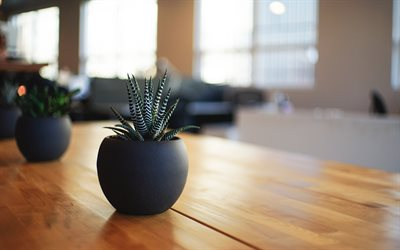 cactus, flower in a pot, table, house plants