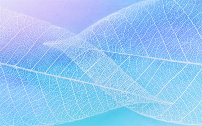 white silhouettes of leaves, blue background, creative background, background with white leaves