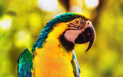 Macaw, parrot, Blue-and-yellow macaw, beautiful bird, parrots, South American birds
