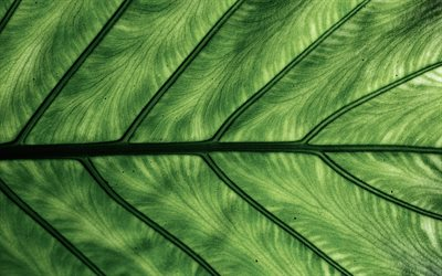 green leaf texture, green leaf, eco background, green leaf background, natural textures