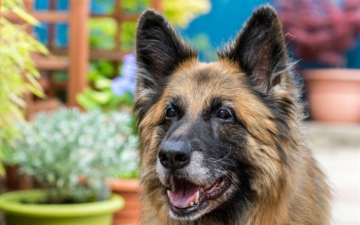 Herunterladen hintergrundbild deutscher sch ferhund hund for Minimalismus haustiere