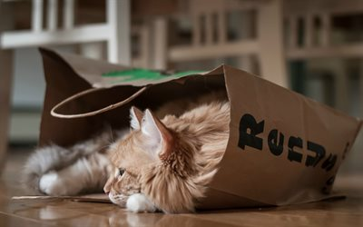 ginger fluffy cat, cat in a paper bag, cute animals, pets, cats, Persian cat