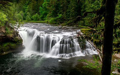 Lower Falls, beautiful waterfall, river, forest, green trees, Lower Lewis River Falls, Washington, USA