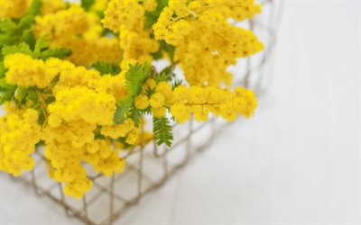 mimosa, yellow spring flowers, beautiful yellow flowers, mimosa branch