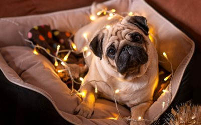 French bulldog, puppy, small dog, New Year, Christmas, garland, lights, dogs