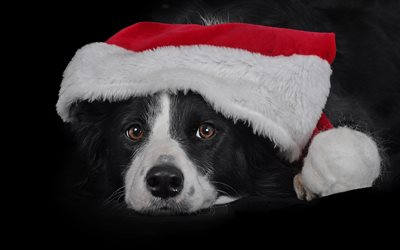 Border Collie, Christmas, New Year, pets, black dog, cute animals, Year of the dog