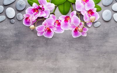 concrete background with pink orchids, concrete texture, orchids, round stones, pink orchids