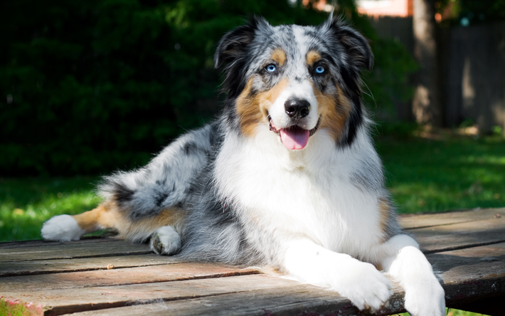 Best Calm Dog Breeds For Families