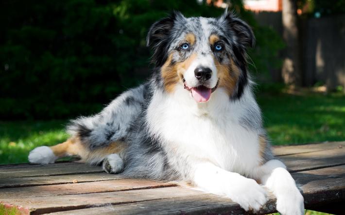 Median Dog Breeds