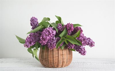 lilac, wicker basket, spring flowers, purple flowers, vase with lilacs, bouquet of lilac