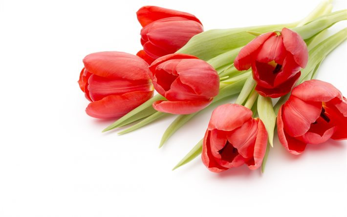 Red tulips, spring, spring flowers, tulips, bouquet