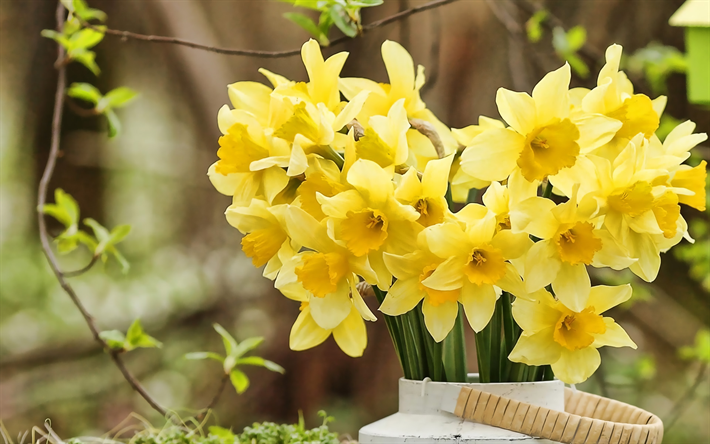 yellow daffodils, spring flowers, bouquet of daffodils, yellow flowers, daffodilly, Narcissus