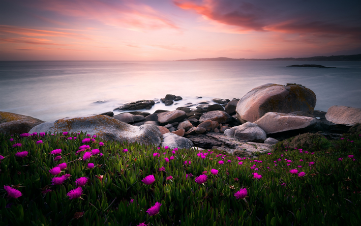 coast, sea, red wildflowers, sunset, evening, seascape