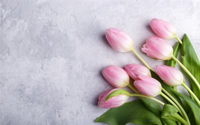 pink tulips, gray wall texture, spring pink flowers, tulips, floral background