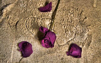 purple rose, sand, two hearts, love concepts, roses, purple flowers, romance
